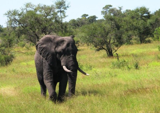 Safári na África: como ir, o que fazer e o que ver nesta aventura!