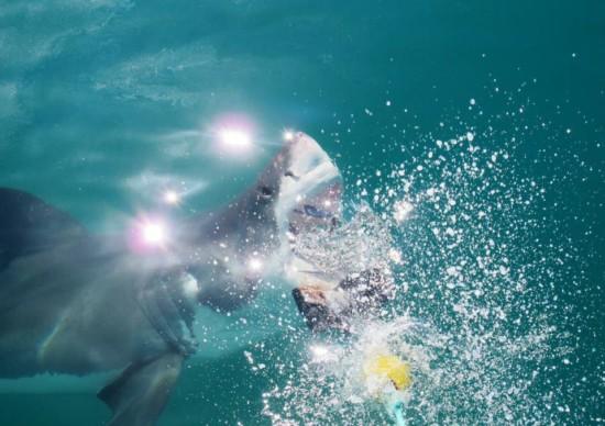 Adrenalina: tudo sobre o mergulho com tubarões brancos, em Cape Town