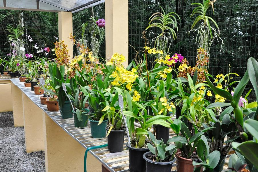 jardim botanico recife