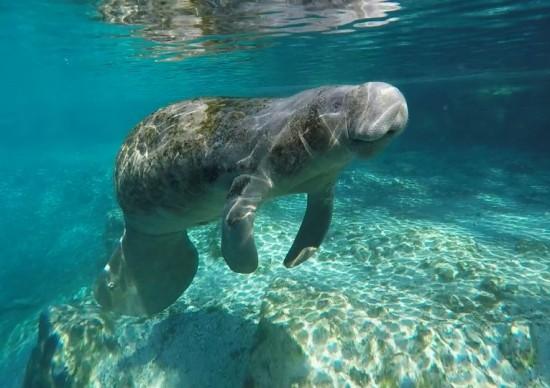 Visit Florida: percorra virtualmente mais de 1,3 mil km de praias!